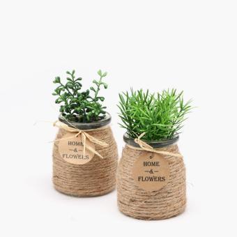 SM Home Podocarpus and Anigozanthos Plant