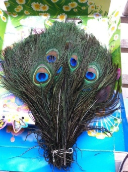 100pcs High Quality Real Natural Peacock Feathers About 10-12Inches - intl