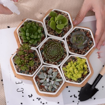 7+1 pcs/set Decorative Geometry Hexagon White Ceramic SucculentPlant Pot Porcelain Flower Pot Zakka Home Decor(7 pots+1 tray) -intl - 2