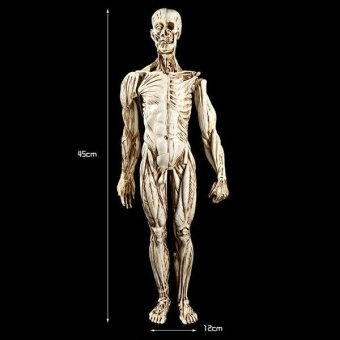 BolehDeals Removeable Resin Man Human Anatomy Skeleton Muscle ModelFull Body White - intl - 4