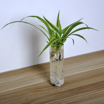 Creative Home Cylinder Glass Mini Wall Hanging Water Plant Vase Bottle Tank - 2
