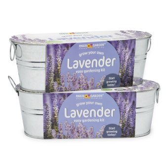 Harga Paris Garden Lavender Easy Gardening Kit (Set of 2)