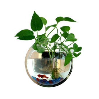 Wall Mounted Acrylic Fish Bowl - intl Price Philippines