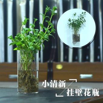 Indie transparent hydroponic plant wall hangers small vase glass vase