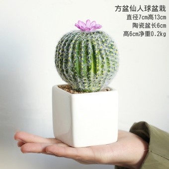 Indoor garden home model small pot plant cactus