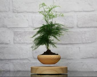Levitation Air Bonsai (no plant) Self balance magnetic Suspensionflower pot pottedplant levitate tubs - 2