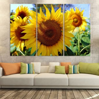 Luxry 3 Panel Modern Painting Home Decorative Art Picture Paint onCanvas Prints painting sunflower The field (No frame)