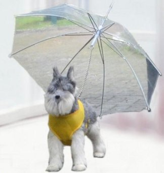 Pet Umbrella Small Dog Traction Umbrella - intl