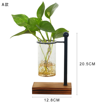 Wooden hydroponic green radish plants glass flower holder transparent glass container