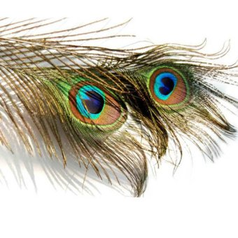 S & F Peacock Eye Tail Feather For Masquerade Decoration Party - Intl - picture 2