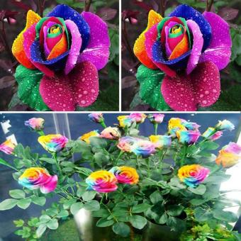 600pcs Colorful Rainbow Flower Seeds Garden Plants Unique Perennial Lover - intl