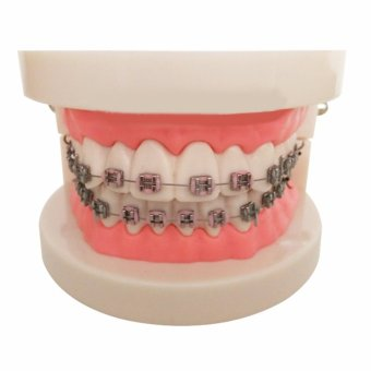 Vinmax Dental Teach Study Adult Oral Demonstration Teeth Model WithBrackets - intl Price Philippines