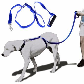 The Instant Trainer Leash for Dogs 6ft Price Philippines