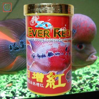 XO Ever Red Fish Pellet Aquarium Fish Food 280ml/100g (FF477ML)