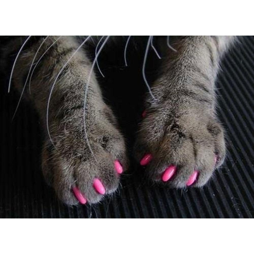 Philippines   yesefus Soft Nail Caps for Dog Cat Claws (Hot Pink ...